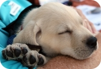 Photo of Gordy as a puppy sleeping