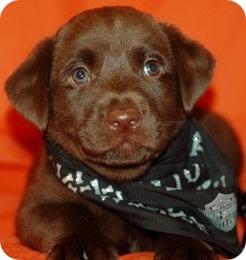 Raise a Puppy Scout (246x260)r