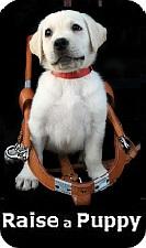 Raise a Puppy